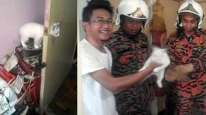 子猫、ドアノブの穴にハマる! 寝ている飼い主を起こし、消防隊が救出!