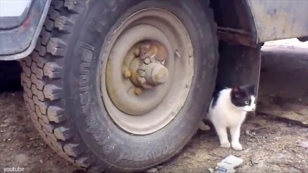 リアル「トムとジェリー」! ちょっとマヌケな猫とそれを弄ぶかのようなネズミ