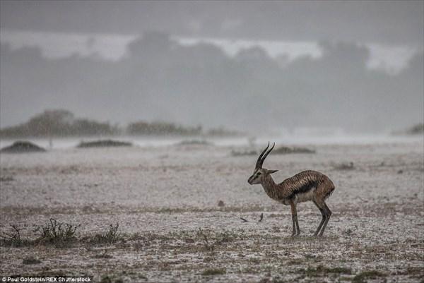動物たちの楽園マサイマラ国立公園で洪水!? 豪雨によってサバンナが消える