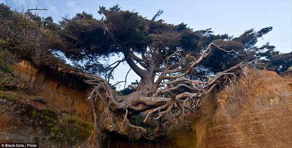 まるで浮いているよう! ありえない状態で生き続ける「生命の樹」!