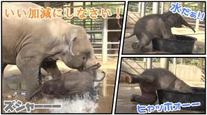 ヒャッホゥ!水だ! 水にテンションが上がる赤ちゃんゾウと、注意するお母さん