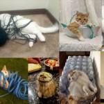 猫好きには堪らない! ちょっとおバカで可愛い猫画像25選!!