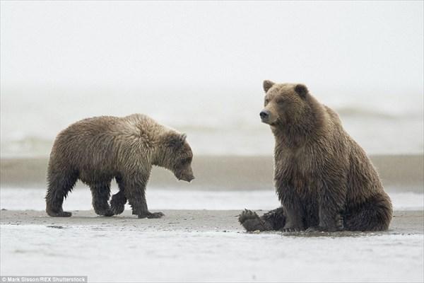 ヘイ!ヘイ!ヘイッ! カモメにダンスを披露する子熊と、完全に無視するカモメ