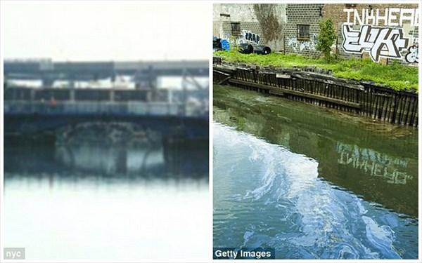 ニューヨークの運河で三つ目のナマズが釣り上げられる! 釣り人は食べると語る