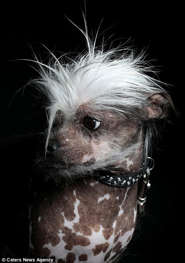 2015年ブサイク犬チャンピオンも! ブサイク犬と呼ばれる犬たちの肖像画