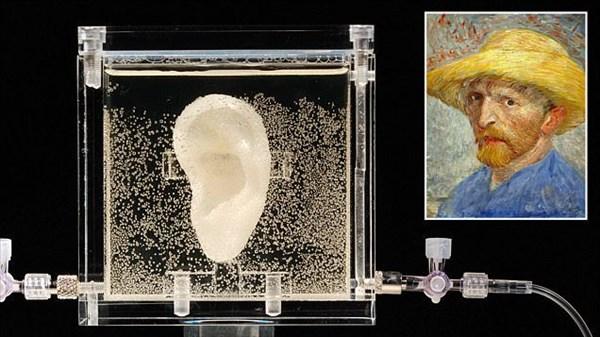 ゴッホの子孫のDNAから作ったゴッホの耳 ニューヨークのギャラリーで展示へ