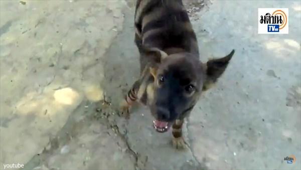 タイで撮影されたトラのような模様の生物! しかし、どう見ても染められた犬…
