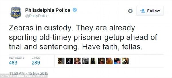 サーカスからシマウマのペアが脱走! 地元警察は囚人服を着ていたとツイート