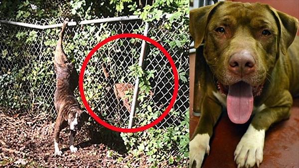 身動きが取れなくなった恋人のために、2日間吠えて助けを呼び続けた犬ゼウス