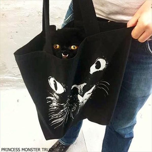 「プリンセス・モンスター・トラック」という名前の邪悪な顔を持つ猫