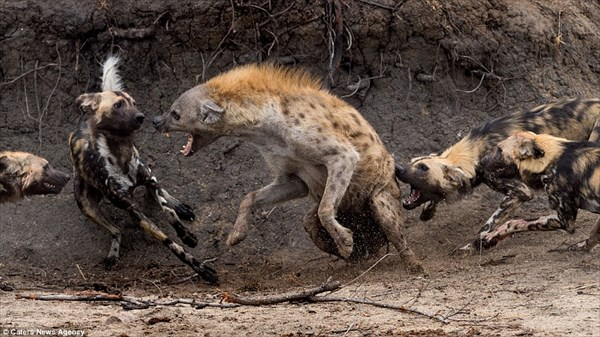 Scary animal attack pictures - photo#21
