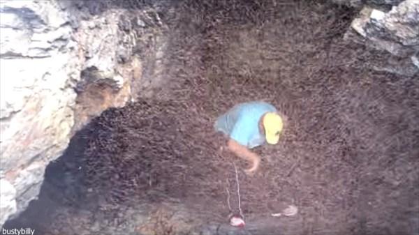 虫虫パニック! 洞窟から飛び出す信じられないほど大量の虫たち!