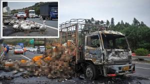 中国でアヒルを運搬していたトラックが炎上 2000羽がカモのローストになる