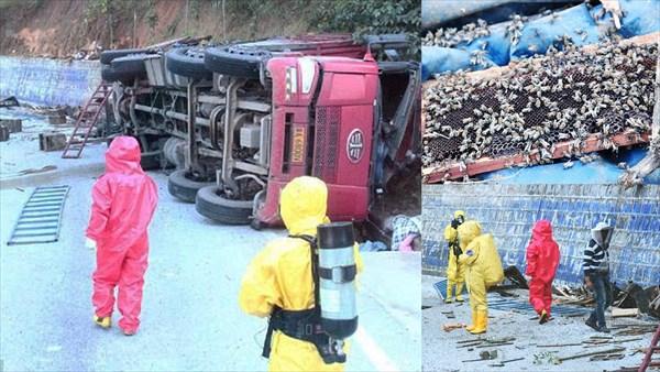 200万匹のミツバチを積んだトラック横転 蜂に対抗するため養蜂業者を招集!