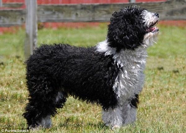 アメリカの愛犬家団体が、7品種の犬を正式な品種として新たに認定!