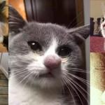 ちょっと可愛そうだけどマヌケ 蜂に刺された猫たちの画像 15匹!