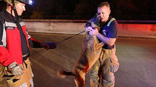 洪水に巻き込まれた犬 救助してくれた消防士にヨダレだらけのキスをプレゼント