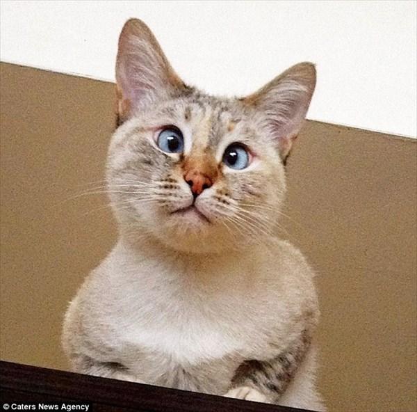 ネズミを捕るのは苦手だがネット上で人気者! 寄り目猫のムニ