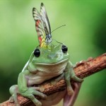チョウを頭の上に乗せるモヒカンヘアーのカエルが撮影される!