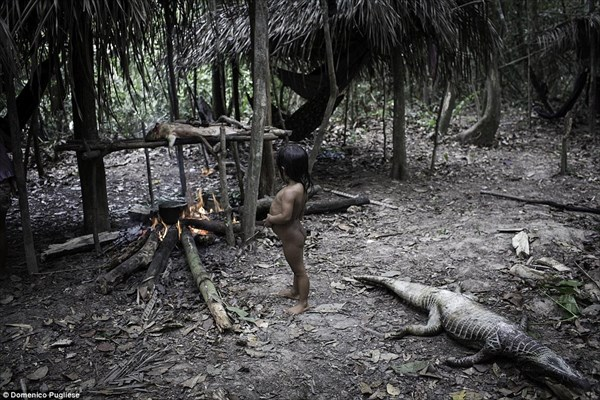 動物を愛し、そして食べる ブラジルアマゾンの自然に生きるアワ族