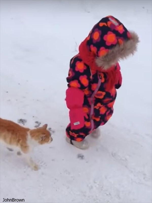 「ムシャクシャしたからやった」 女の子に飛びかかって転ばすネコの動画