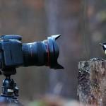 新作の「リス・カメラマン」シリーズ! 今度はアカリスが鳥を撮影!