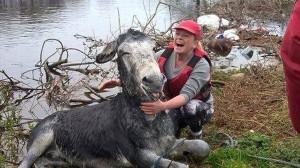 洪水から救助されたロバ 嬉しさのあまりニヤニヤする!