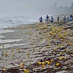 フロリダ州の海岸にコーヒー缶が大量出現 周辺住民大喜び!