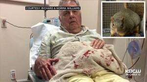 キラーリス? アメリカの夫婦が凶暴リスに襲われ入院! 同じリスに8人が被害