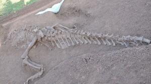 中国の道路工事現場から、2頭の巨大な恐竜の化石(ルーフェンゴサウルス)発見