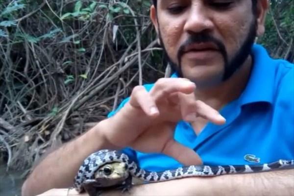 自称「スネーク忍者」の男 猛毒を持つヘビとカエルを同時に口の中に入れる!
