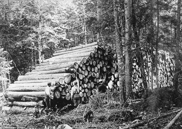 巨木を人力で切り倒す! 19世紀アメリカの建築基盤を支えた木こりたちの写真