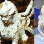 1000年以上前の古代中国の墓から、エジプトのスフィンクスが出土する!
