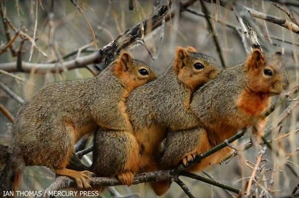 「寒いから抱きついちゃお」 体を寄せ合う仲良すぎなリスたち!