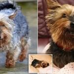 人間に換算すると117歳! 26年間生きているイギリス最古の犬「ジャック」