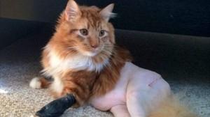 手術のために剃毛した猫 ネットで「鳥の胸肉」みたいだと話題になる!
