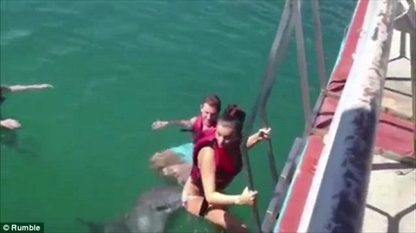 イルカが女の子にセクハラ! 鼻先で執拗につつく!