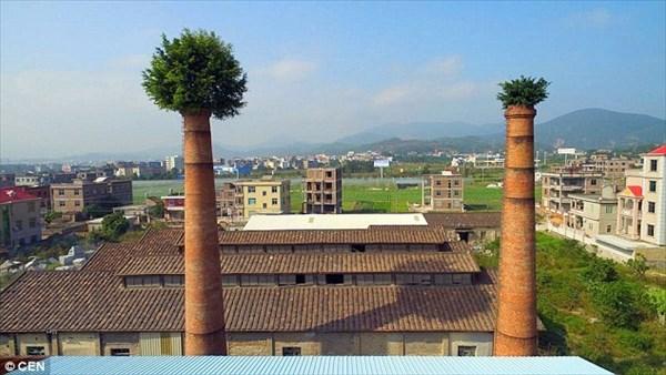 高さ30mの煙突から木が生えた! 煙突の帽子と呼ばれる中国のガジュマルの木