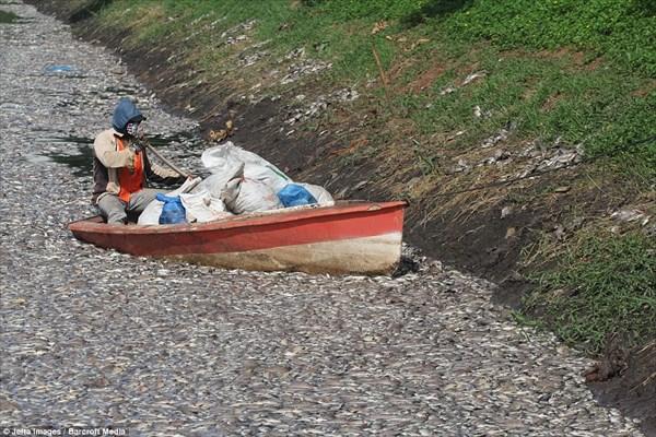 インドネシアのジャカルタで魚が大量死 原因は特定できていない