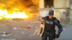 火災現場から犬を救出せよ! 犬のために炎に飛び込むメキシコ警察