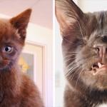 独眼猫のウェスリー まるで海賊のような極悪面に成長!インスタグラムで大人気