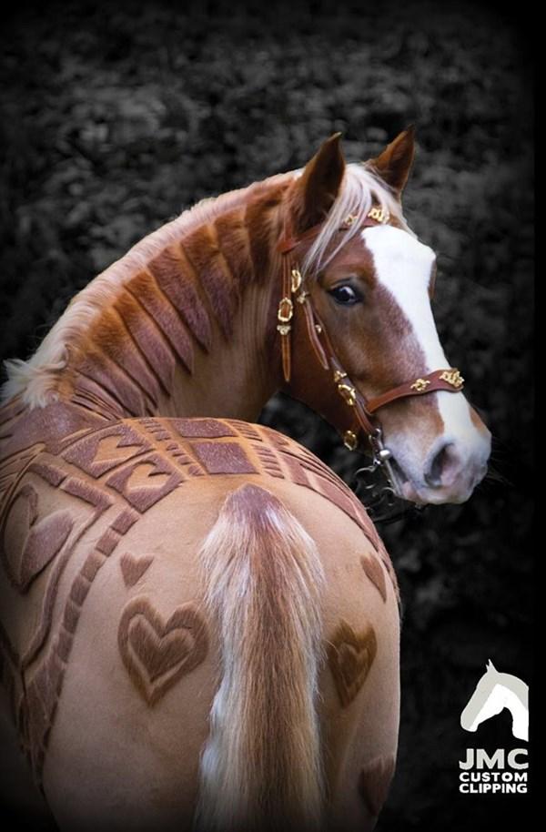 最新の馬のトリミングが芸術的! トリマーいわく馬にもメリットがある