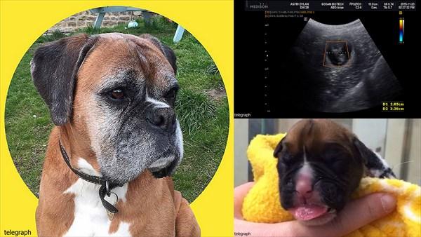 死んだ愛犬の皮膚片から、愛犬のクローンを作成した夫婦!