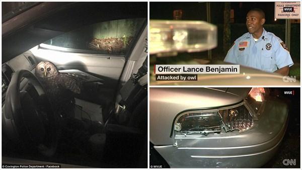 クリスマス・イブにフクロウがパトカーを襲撃! 警察官が軽傷・パトカー損傷!