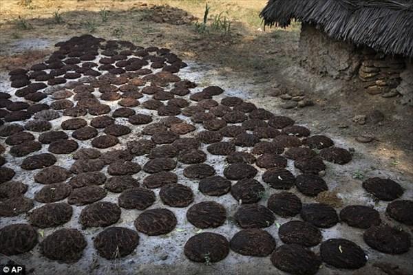 インドのAmazon・ebayで牛糞ケーキが好評販売中! ギフト包装も可!