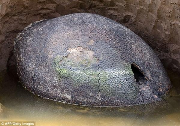 約1万年前、南米に生息していた巨大アルマジロ(グリプトドン)の化石を発見!