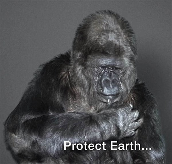 手話を話せるゴリラのココが、地球を破壊する人間に向けて新年のメッセージ!