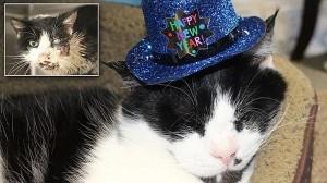 埋葬された5日後に墓から出てきたゾンビ猫、無事に復活1周年を迎える!