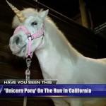 カリフォルニア州で伝説のUMAユニコーンが捕獲された?