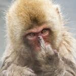 【長野県】 入浴を覗かれブチギレたサル、カメラマンに向かって中指を立てる!